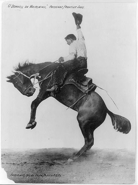 cowboy 87648